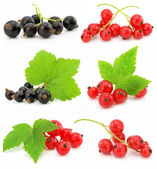 Collection of black and red currant fruits isolated — Stock Photo