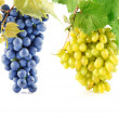Set blue and yellow grape fruits with leaves — Stock Photo