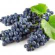 Blue grape with green leaves isolated fruit — Stock Photo