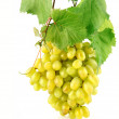 Fresh grape with green leaves isolated fruit - Stock Photo