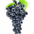 Cluster of blue grape isolated — Stock Photo