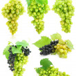 Collection of isolated grape clusters with green leafs — Stock Photo #6601611