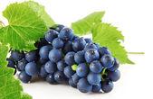 Izole meyve yeşil ile mavi üzüm yaprakları — Stok fotoğraf