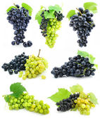 Collection of ripe fruit grape cluster isolated — Stock Photo