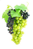 Cluster of green grape isolated on white — Stock Photo