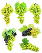 Collection of isolated grape clusters with green leafs — Stock Photo