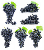 Collection cluster of blue grape isolated — Stock Photo