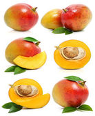 Set of fresh mango fruits isolated on white — Stock Photo