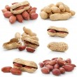 Collection of dried peanut fruits isolated — Stock Photo