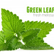 Fresh green leaf of melissa — Stock Photo