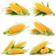 Set of fresh corn vegetable with green leaves — Stock Photo