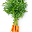 Fresh carrot fruits with green leaves — Stock Photo #6630788