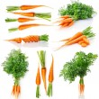 Set fresh carrot fruits with green leaves — Stock Photo