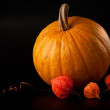 Halloween pumpkin vegetable on black — Stock Photo