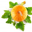 Yellow pumpkin vegetable with green leaves - 图库照片
