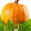 Yellow pumpkin vegetable with green leaves — Lizenzfreies Foto