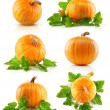 Stock Photo: Set vegetable pumpkins with green leaves