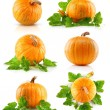 Set vegetable pumpkins with green leaves - Stockfoto