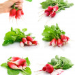 Stock Photo: Set of fresh red radish with green leaf