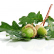 Three green acorn fruits with leaves — Stock Photo