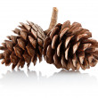 Two pinecones on branch - Stock Photo