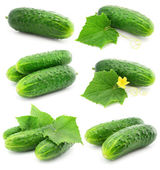 Green cucumber vegetable fruits with leafs isolated — Stock Photo