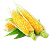 Fresh corn vegetable with green leaves — Stock Photo