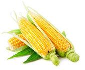 Verduras frescas de maíz con hojas verdes — Foto de Stock