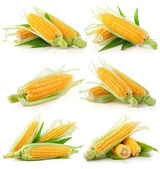 Set of fresh corn vegetable with green leaves — Foto de Stock