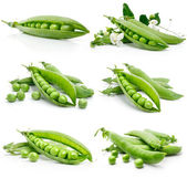 Set of fresh green pea in the pod isolated — Stock Photo