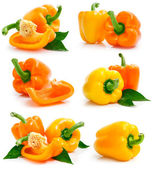 Set of fresh yellow orange peppers with green leaves — Stock Photo