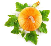 Yellow pumpkin vegetable with green leaves — 图库照片