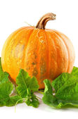 Yellow pumpkin vegetable with green leaves — Zdjęcie stockowe