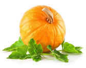 Yellow pumpkin vegetable with green leaves — Stockfoto