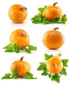 Set vegetable pumpkins with green leaves — Stok fotoğraf