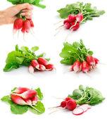 Set of fresh red radish with green leaf — Stock Photo