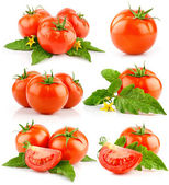 Set of red tomato vegetable with cut and green leaves — Stok fotoğraf