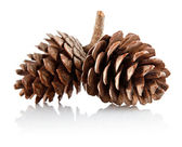 Two pinecones on branch — Stock Photo