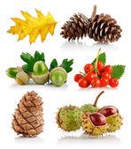 Conjunto de elementos de la naturaleza otoño — Foto de Stock