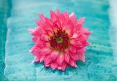 Kwiat papieru — Zdjęcie stockowe