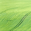 Green fields — Stock Photo #6584317