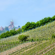 Castle of hochkoenigsburg and vineyards  — Stock Photo