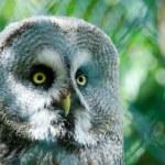 The owl — Stock Photo