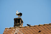 The stork on the roof — Stock Photo