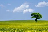 Yeşil ağaç alanları — Stok fotoğraf