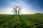 árvore morta em um campo — Fotografia Stock