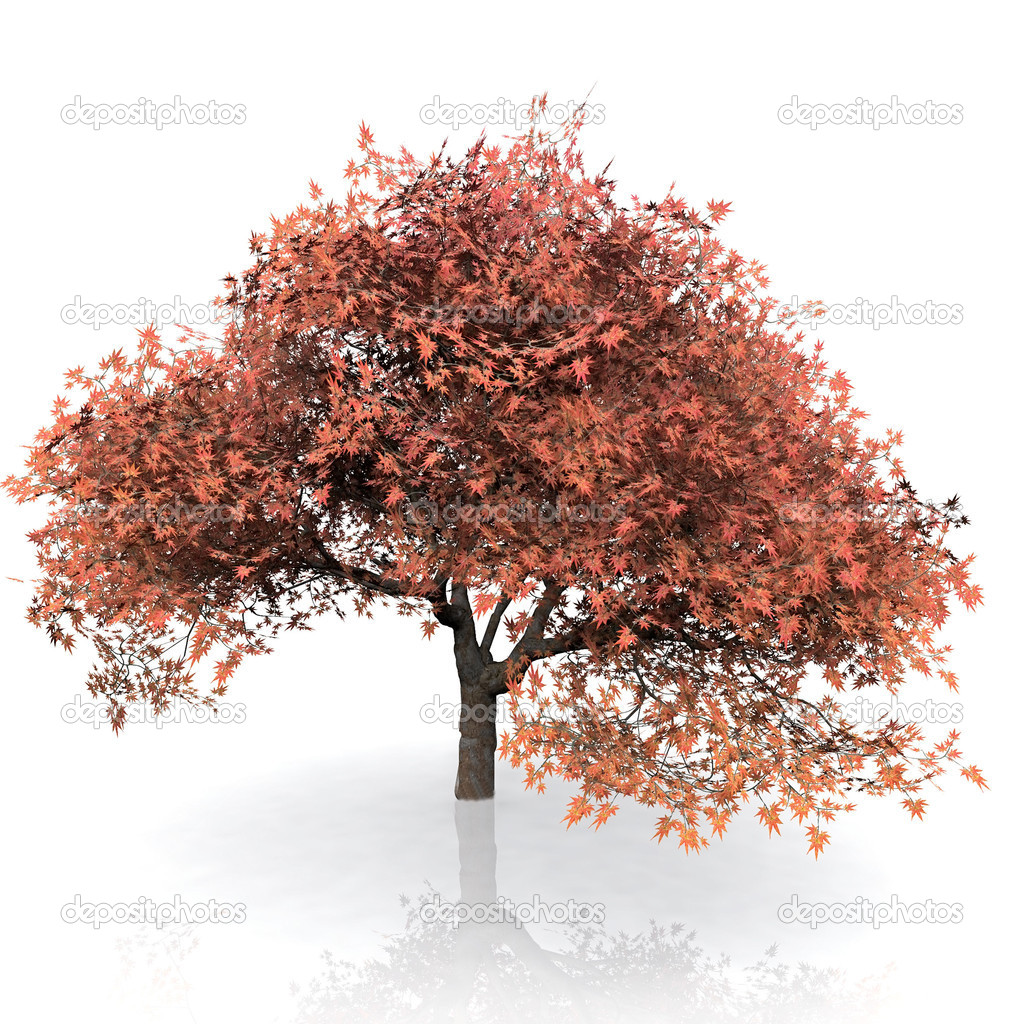 Displaying 20> Images For - Fall Tree White Background...