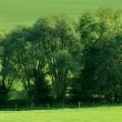 Green field, springtime — Stock Photo