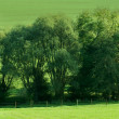 Green field, springtime — Stock Photo #6594072
