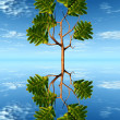 Oak tree in water — Stock Photo